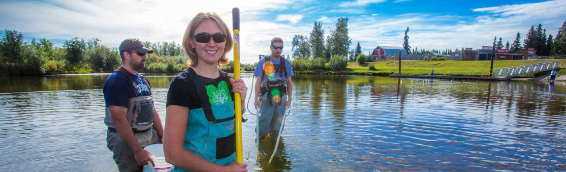 UAF fisheries students wading in the Chena River holding nets and buckets