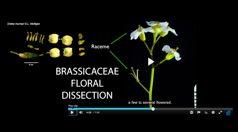 Plant dissection slide