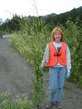 woman in vest pulling weeds