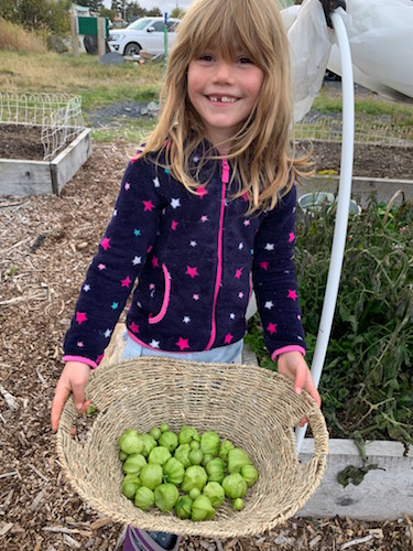 young girl holding basket of tomatillos