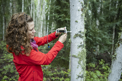 woman measuring water content on tree