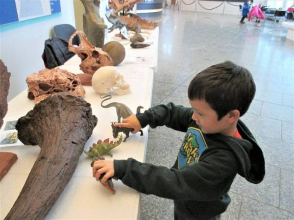 A young child plays with dinosaur figurines on a table. Also on the table are a number of fossil bone.