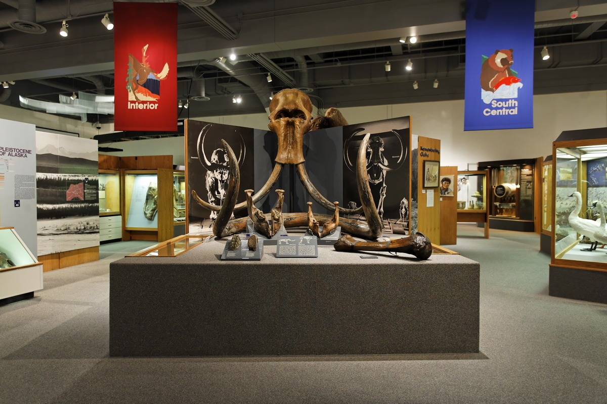 Mammoth and Mastodon display in the Gallery of Alaska. Photo by P. Fisher