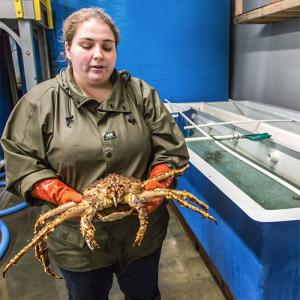 UAF graduate student Asia Beder displays a blue king crab