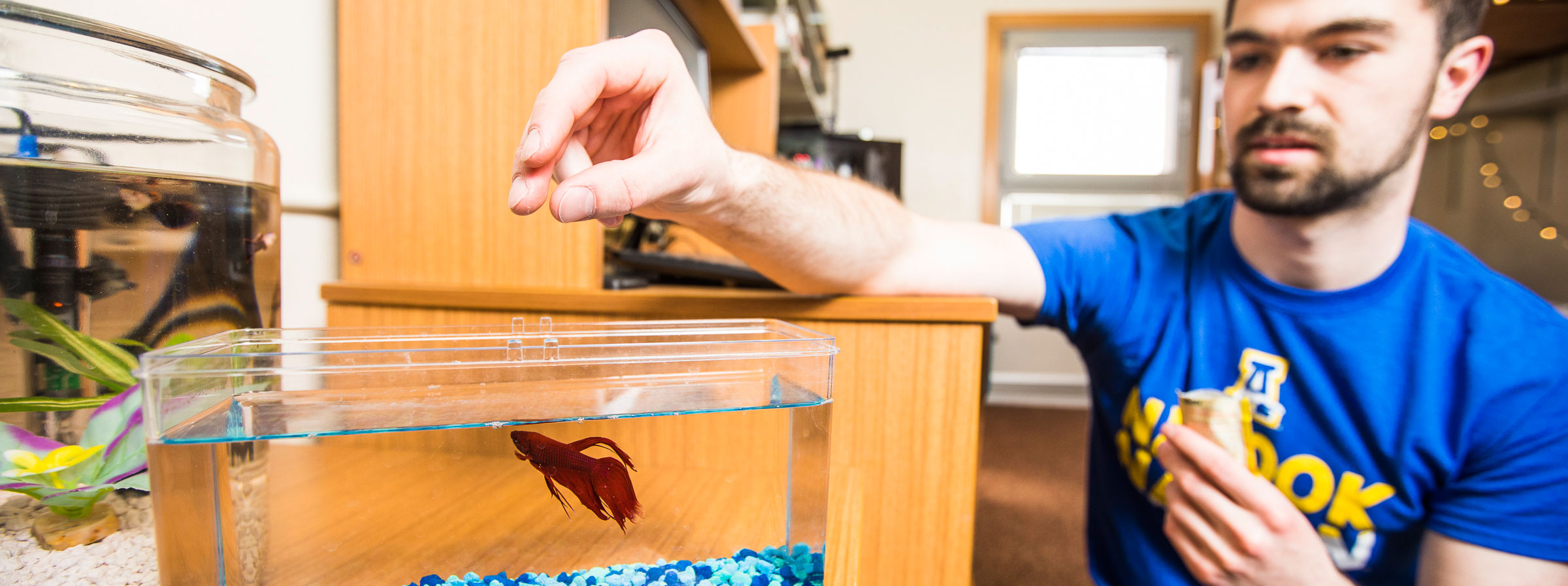 Student feeding fish in his room.