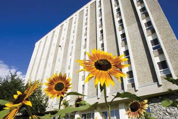 Moore Hall in the summer is pictured with sunflowers in the foreground.